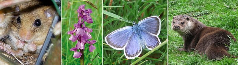 A new British Standard for Biodiversity